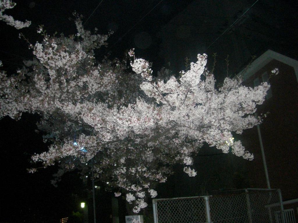 2011-04-15-CIMG1194.jpg
