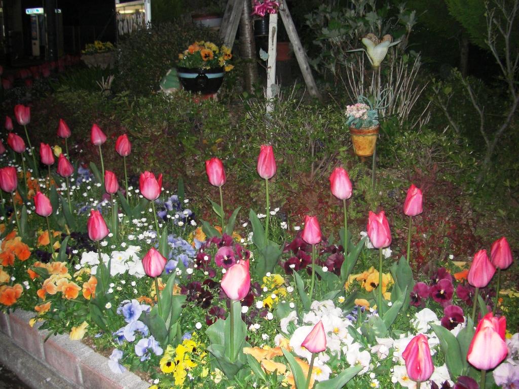 2011-04-15-CIMG1197.jpg