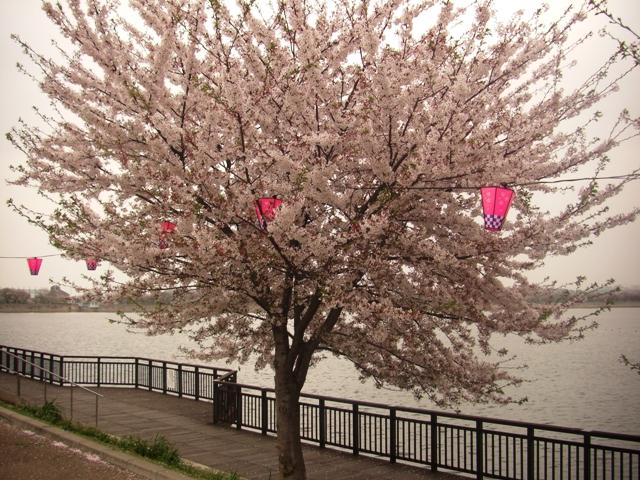 2011-04-19-CIMG1207.jpg