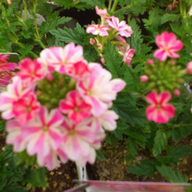 2012-05-19_1337401204.jpg
