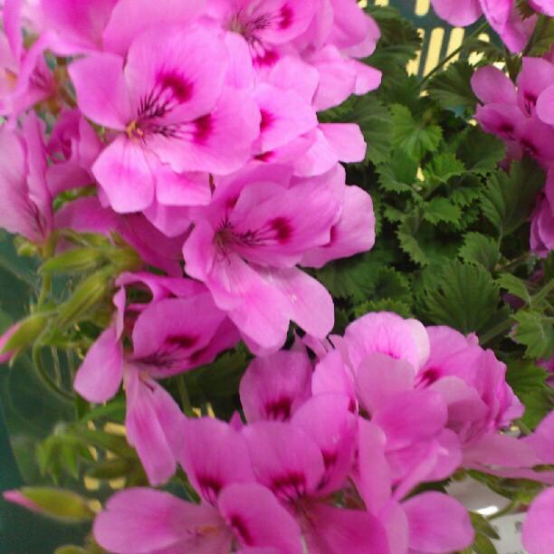 2012-05-19_1337408241.jpg