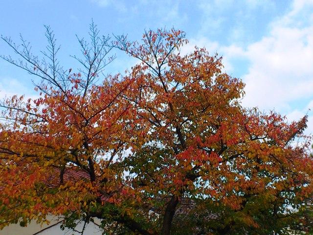2012-11-20-DSC_0116.jpg