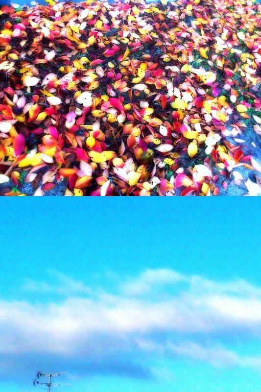 2012-11-21-111.jpg