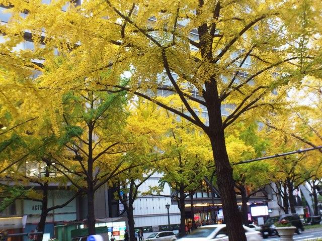 2012-12-05-DSC_0060.jpg