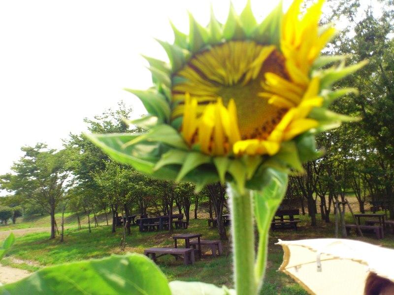 2013-08-12-DSC_0546.jpg