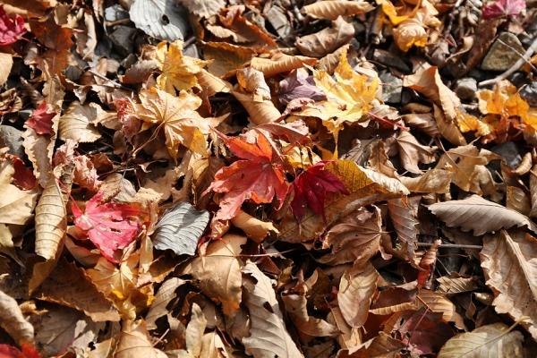 既に紅葉は終わっていたが、ところどこに秋が残る。