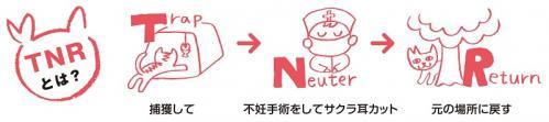 tnr - コピー