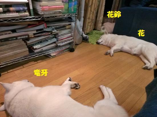 2013.6.9 みんな寝てる