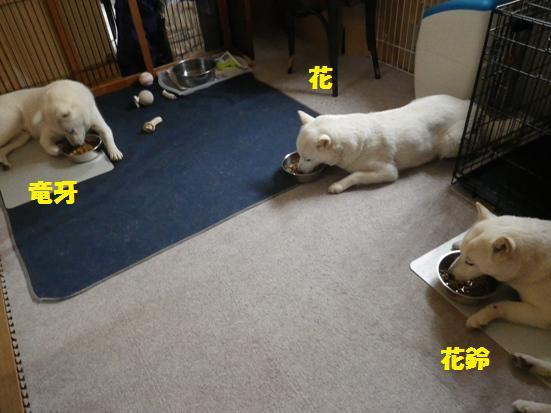 2013.6.17 ごはんタイム
