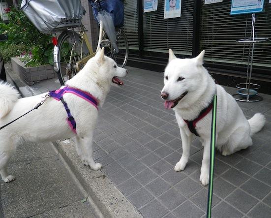 2013.6.22 花(右)&花鈴2