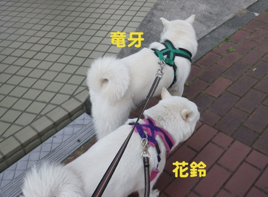 2013.7.2 花鈴&竜牙ペア