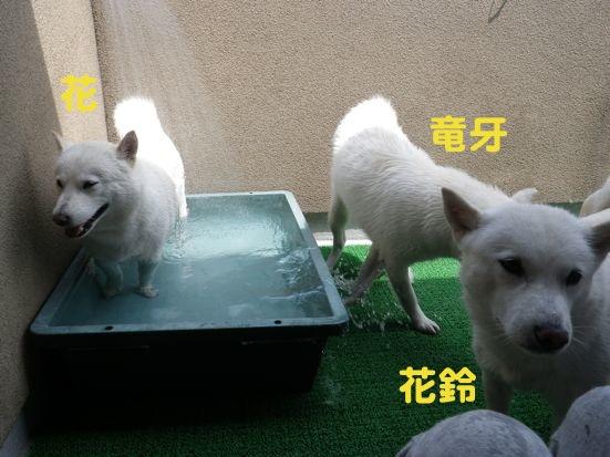 2013.7.14 水浴び
