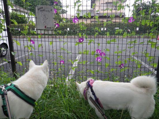 2013.7.18 花鈴&竜牙4