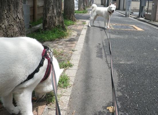 2013.8.1 花&竜牙1