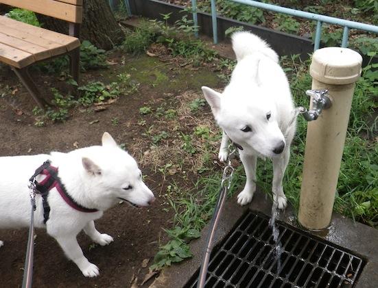 2013.8.1 花&竜牙4