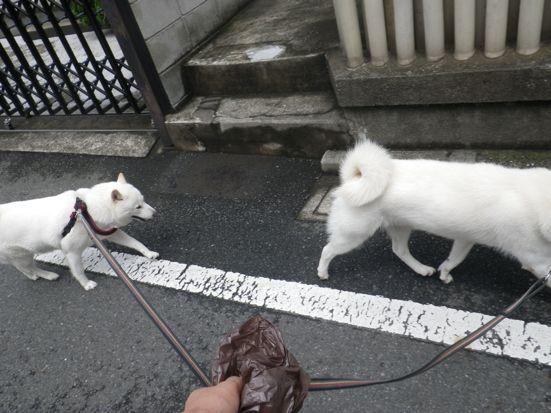 2013.8.1 花&竜牙6