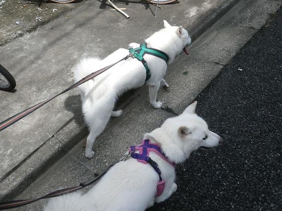 2013.7.18 花鈴&竜牙1