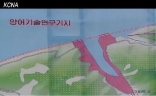 青島6養魚