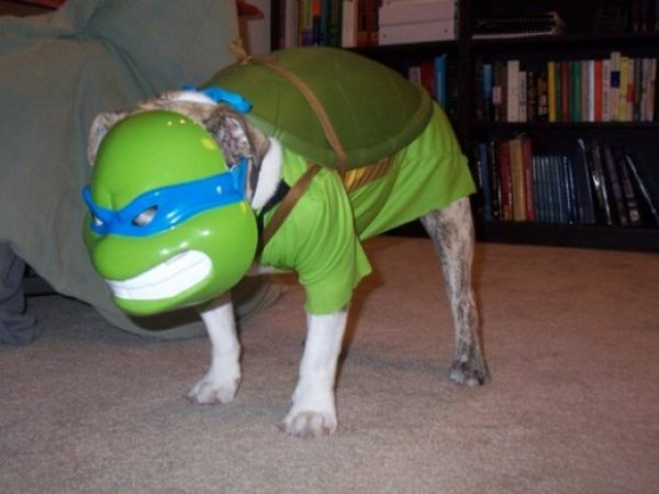 0b4ae66f7886f1698def0aac33fcd9bb-25-dogs-dressed-as-other-animals-for-halloween.jpg