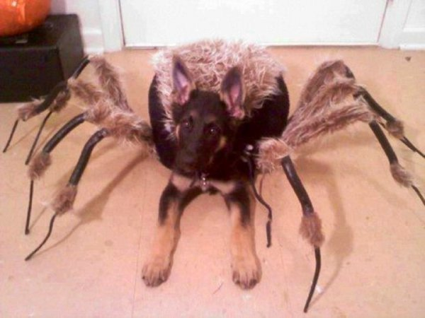 1290894bf74f1576e028759734180d06-25-dogs-dressed-as-other-animals-for-halloween.jpg