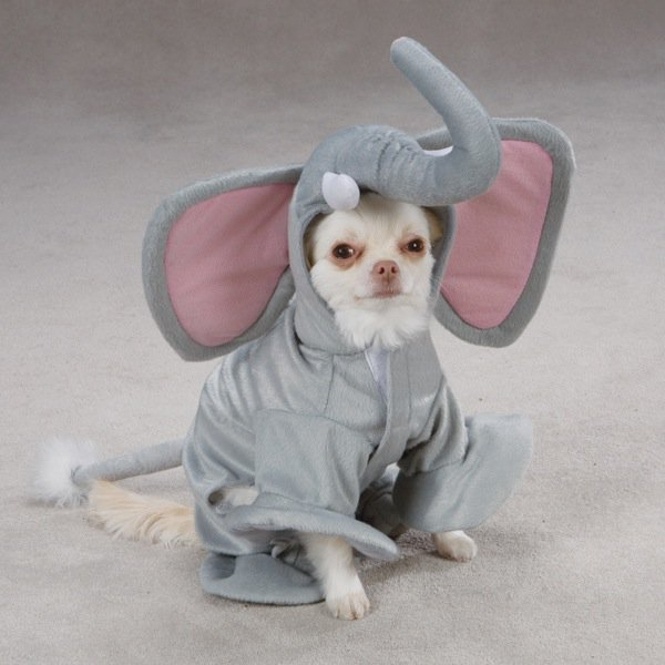 Source: deathandtaxesmag-25-dogs-dressed-as-other-animals-for-halloween (2)