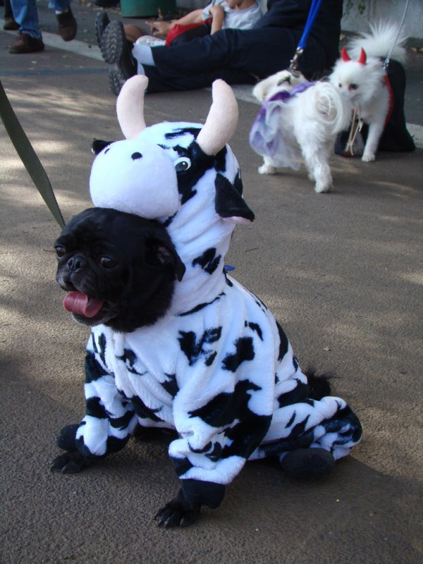 9ef496babdc7c562ce4db0b0ecfb27b6-25-dogs-dressed-as-other-animals-for-halloween (1)