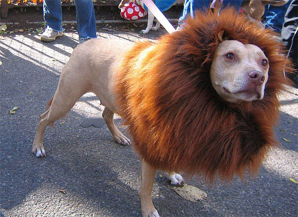 6fa9cfcb7b8616597536c8f0e5cf47d6-25-dogs-dressed-as-other-animals-for-halloween.jpg