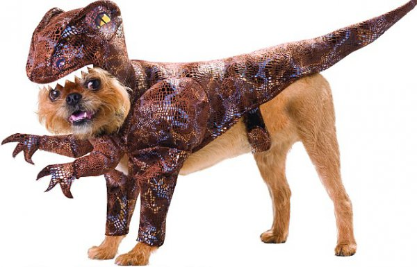 7a06a6921483fc51242dccc383337b7c-25-dogs-dressed-as-other-animals-for-halloween.jpg