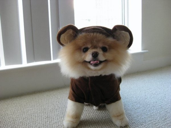 994fa43f0cc5837e6708d80df1a676f5-25-dogs-dressed-as-other-animals-for-halloween.jpg