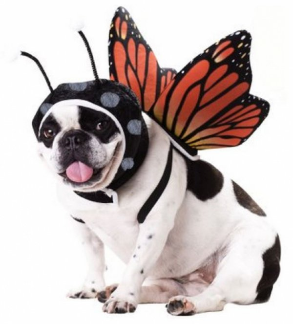 c6f1b567b304fa7e9bd6a72d7e54ed26-25-dogs-dressed-as-other-animals-for-halloween.jpg