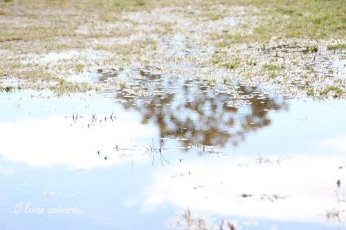 たまりIMG_2013_04_03_9999_88水