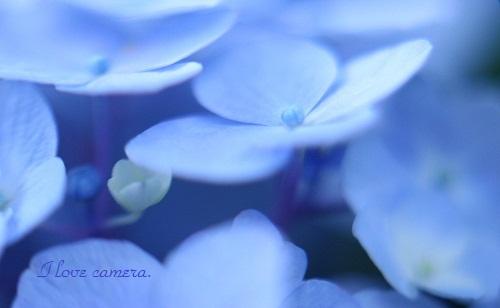 2011_0613_145549-IMG_1930水中花