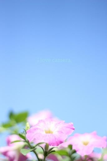 IMG_2012_07_30_8018夏空3-1