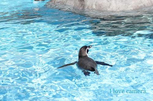 IMG_2012_12_11_9999_13ペンギン2