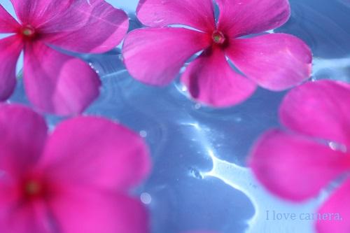 IMG_2013_07_17_9999_11水に浮く花