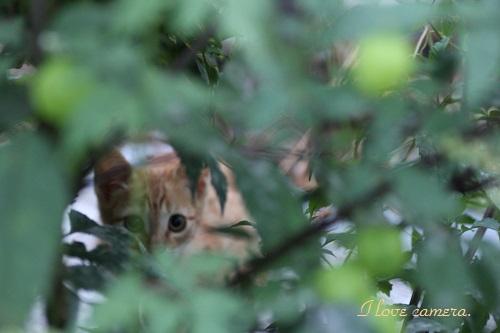 IMG_2013_07_21_9999_154子猫♪