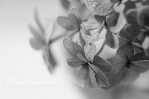 IMG_2013_07_26_9999_12紫陽花2
