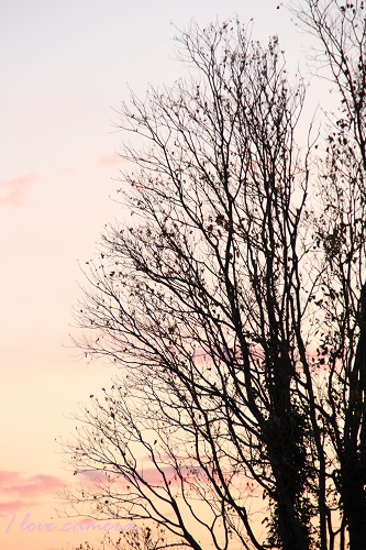 IMG_2012_11_15_9477夕暮れの空