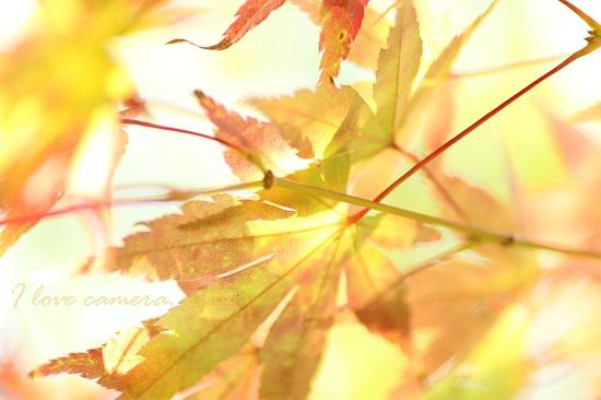 IMG_2013_11_11_9999_1紅葉