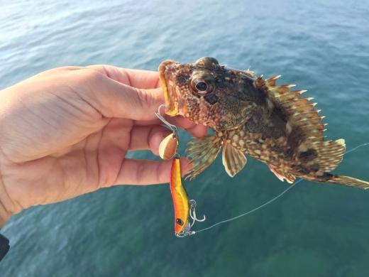 20141025007_ナブラ打ちで釣れたガラカブ