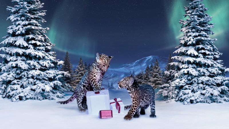 Cartier-Winter-Tale-[1]