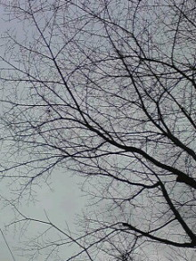 極楽手帳~写真家&タロット鑑定士EMYのブログ-ST331406.jpg