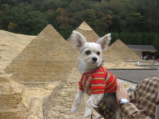 5ピラミッド2 1102
