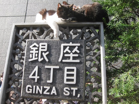 8銀座猫 1117