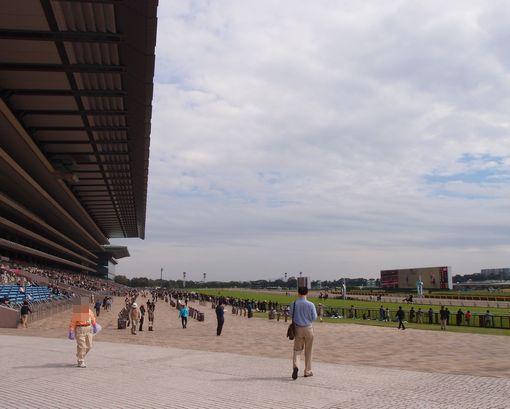 東京競馬場20131019