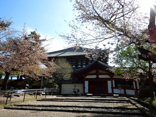 東大寺と桜
