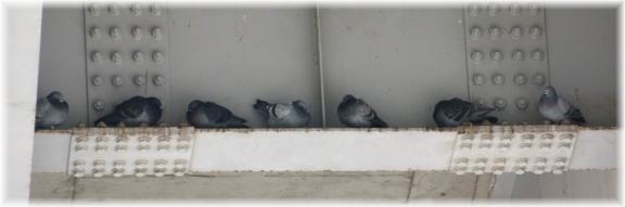 140118E 121線路下の鳩