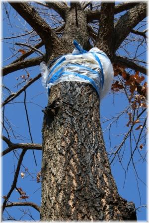 140118E 014樹木の治療