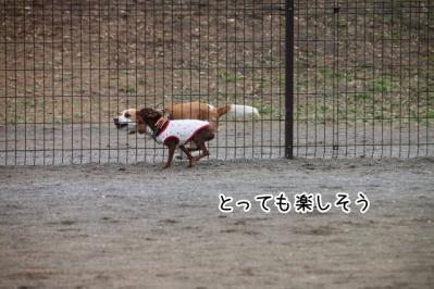 2013_03_20_9999_49.jpg