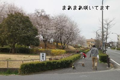 2013_03_23_9999_4.jpg